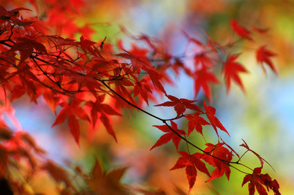 When is a good time to see autumn leaves in Japan?