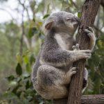 australia-871002_640