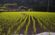 International farm stay travelers in Japan tend to increase with the largest ratio of one or two nights