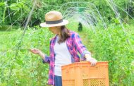 Airbnb forms partnership with Kobe City in Japan for farm stay to attract agri-inbound travelers