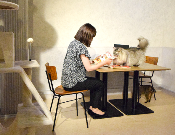 猫とふれあいながらワーケーション、屋内型テーマパークNAMJATOWNに「ニャワーケーションプラン」が登場