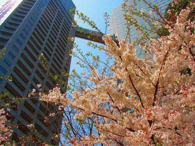 2013年5月の外客数は3割増、単月の過去3番目、東南アジア好調