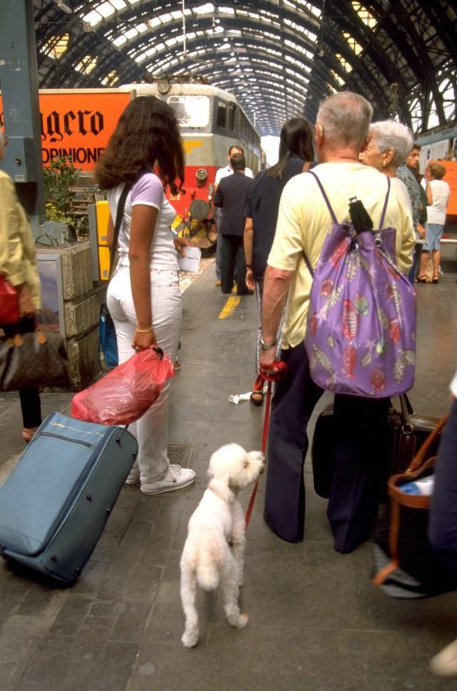 GWにペットと外出する飼い主は約7割、旅行は宿泊費が割高でも約8割が希望