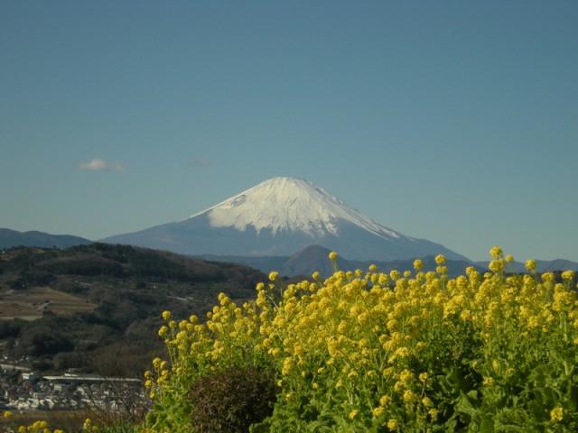 """富士山""""弾丸登山""""、国と都道府県で実態把握へ、ツアーには必要な指導も"""