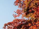 【ランキング】2013年紅葉が美しい観光スポット、1位は伊勢神宮