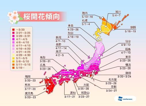 2014年桜の開花は平年並み、開花予想は3月5日に一斉発表 ーウェザーニューズ