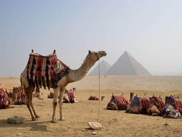 エジプト日本旅行業連盟が発足、日本市場の関係11社が結成