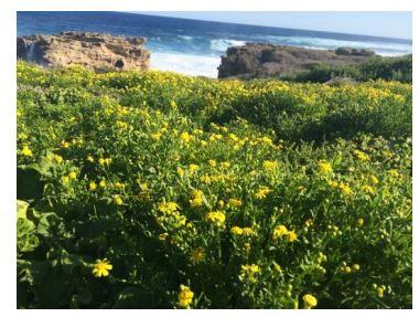 西オーストラリア・ロットネスト島、オーストラリアの人気旅行サイトでナンバーワンに