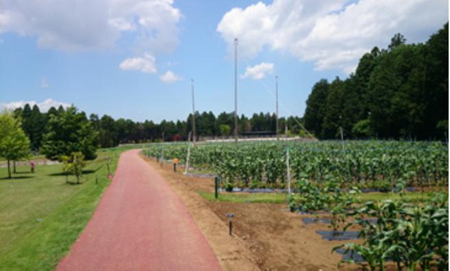 KNT-CTが農業ビジネスに参入、農産物の輸出サポート視野に農園体験や視察ツアーに着手