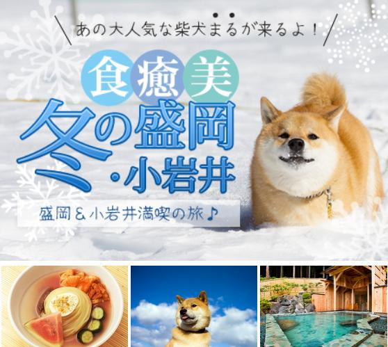 外国人に人気の「柴犬まる」を観光の目玉に、銀河鉄道観光などが岩手県をアピールするツアー販売