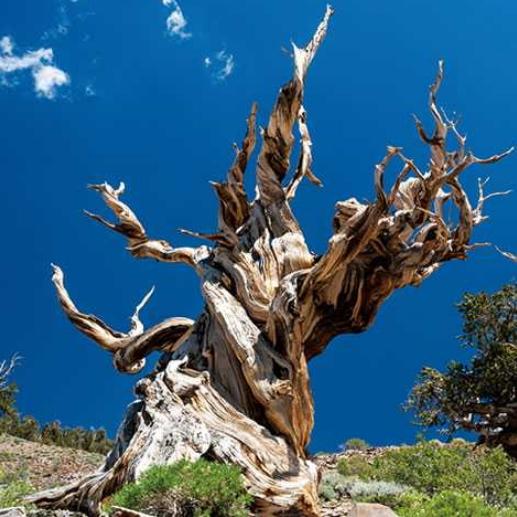 H.I.S、アメリカ西部の「巨木・奇木」をめぐるツアー発表、樹木専門家・西畠清順さんも同行