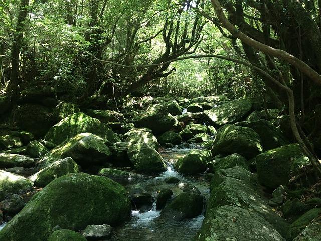 行ってみたい世界遺産ランキング、「屋久島」が6割でトップ、登録まで知らなかったのは「白神山地」が最多 ―日本ブランド戦略研究所