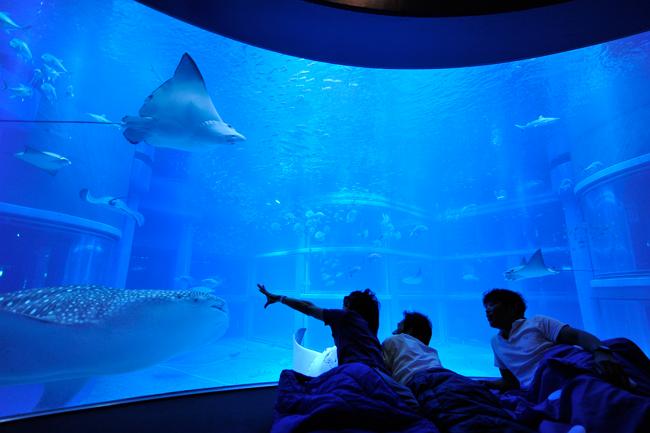 大阪・海遊館が大人向け「おとまりスクール」開催、水族館に宿泊して夜の生態観察