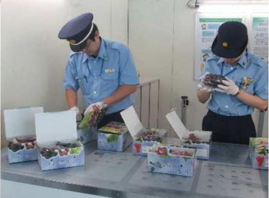 訪日外国人がお土産にする農産物の検疫スムーズ化、北海道のメロンで複数の販売モデルを検討 ―JSTO