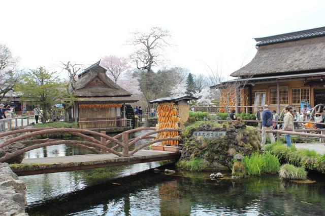 桜のシーズンは特に外国人客で混雑する忍野八海(山梨)