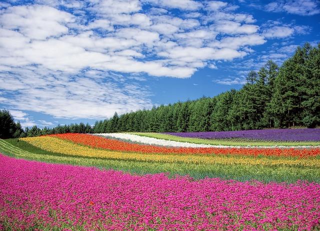 旅行したい都道府県ランキング、1位は「北海道」、海産物や冬のレジャーが人気に ―ソニー生命