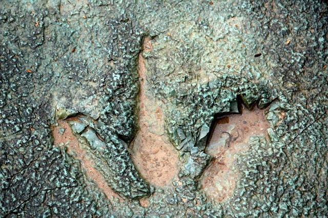 米コロラド州で恐竜の化石堀りツアー、トレッキングやランチ込みで日帰り65ドルなど