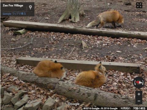 【画像】動物たちの様子をストリートビューで、グーグルが「日本もふもふの旅」公開