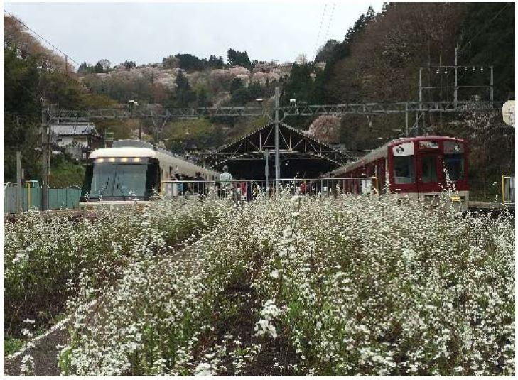 近鉄、観光特急の運行計画で沿線を花や紅葉でいっぱいに、観光資源を創出