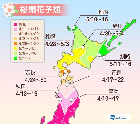 桜開花の最新予想2016、ゴールデンウィークに北海道が見ごろ、前半は函館で満開に -ウェザーニューズ