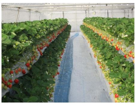 栽培設備のイメージ:オリエンタルランド報道資料より