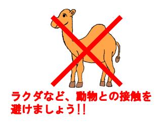 外務省、中東諸国MERSコロナウィルス感染で「ラクダへの接触は避けてください」と注意喚起