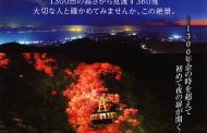 JTB九州、長崎・雲仙地区の着地型ツアーを発売、一般非公開の峠で夜景鑑賞を可能に