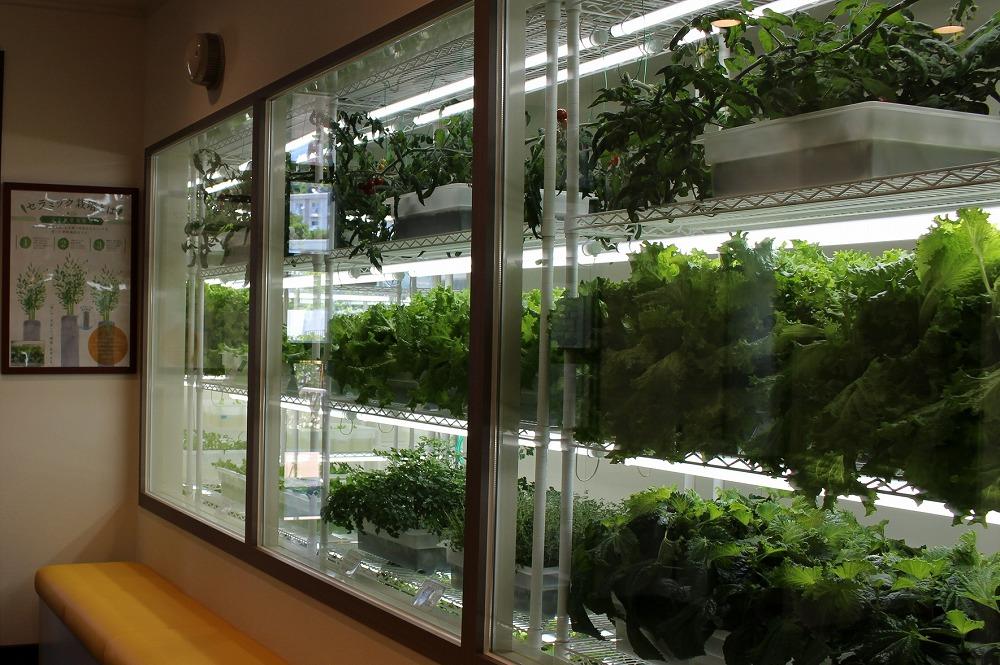 ハウステンボスではエネルギー開発のみならず農業の取り組みも行なっている。写真は「変なホテル」隣接の「変なレストラン」※2015年7月撮影