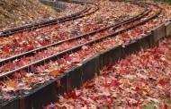 JR、北海道新幹線の運賃を半額で販売、ネット限定の北海道観光の復興支援で