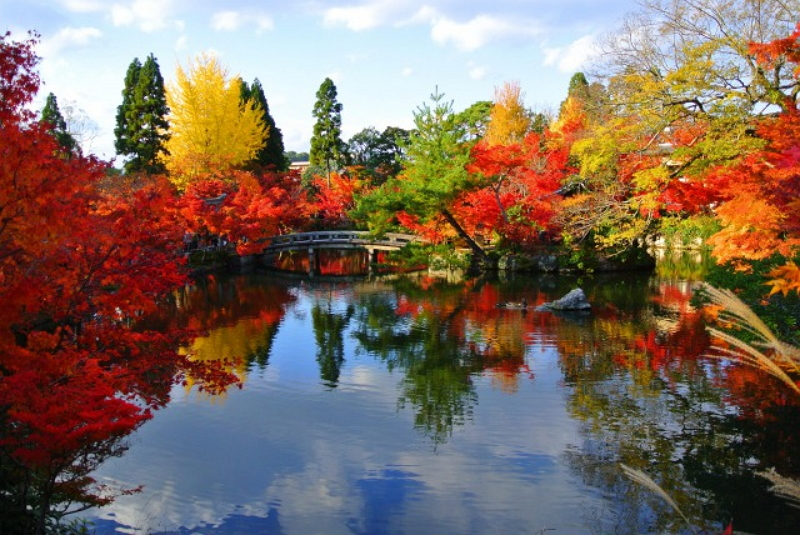 クチコミ人気の紅葉スポット2016、1位は京都・永観堂、2位は青森・奥入瀬渓流 ―トリップアドバイザー