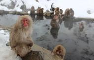 楽天トラベル、クチコミ評価で温泉旅館ランキングを発表、人気1位は大分・宝泉寺温泉の「旅館 えび亭」