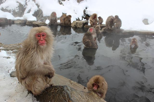 もう一度行きたい温泉地ランキング2016、不動の1位は「箱根」、憧れトップは「湯布院」 ―じゃらん