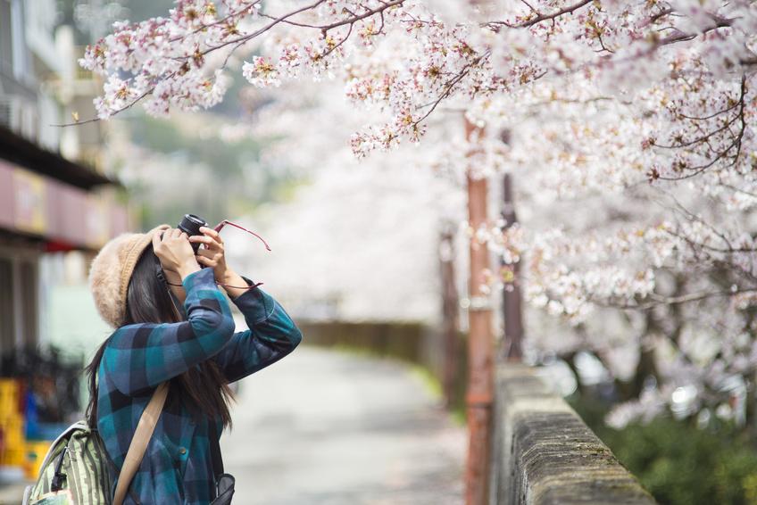 桜の開花予測2018、全国各地で早い予測、上野恩賜公園は3月末に満開・弘前公園はGW前に