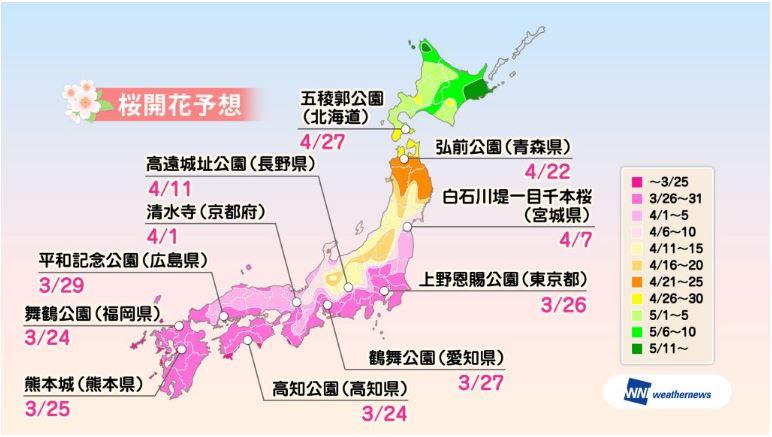 桜の開花ラッシュ、関東南部や九州は今週後半から、満開予想は来週末に