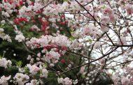 東京都、歴史的建造物に7件を追加、新宿「紀伊国屋ビルディング」など合計101件に