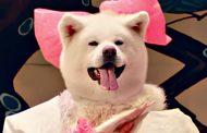 広域連携DMO「秋田犬ツーリズム」の観光PRがアワードで金賞、台湾などインバウンド誘致に成功で【動画】