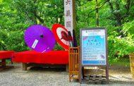 訪日外国人客の熱中症対策で和傘を無料貸出、色とりどりで写真映え意識、都内庭園8か所で