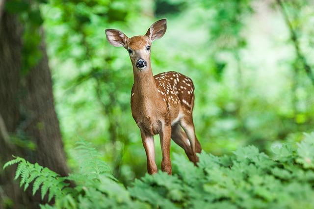 米エクスペディア、野生動物との触れ合い体験を取扱い中止へ、新ポータルサイトで情報提供も