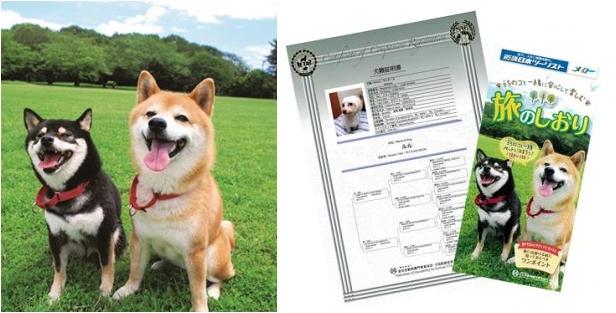 「ペットと一緒に旅行」を推進、近畿日本ツーリストと動物専門機関が協業、旅行前に心構えやトレーニングの講座も