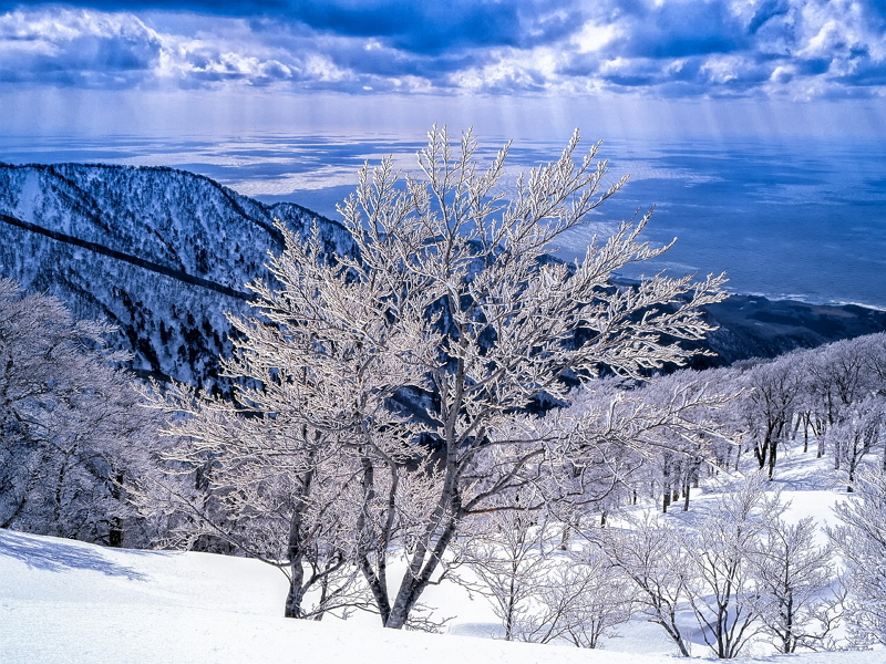楽天トラベル、年末年始の国内旅行ランキング発表、都道府県別の人気上昇トップは青森県、ひとり旅が6割増に