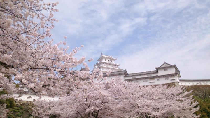 クチコミ評価で選んだ「日本のサクラ100選」、満足度1位は姫路城、2位は東京・千鳥ヶ淵 ―トリップアドバイザー【写真】