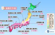 桜の開花予想2018、京都・清水寺は24日に開花、東京・上野公園は29日にも満開に