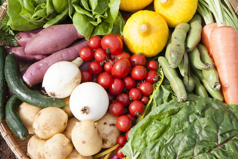 JALが農業に参入、農園事業者と新法人設立で体験型農園を開業、機内食やラウンジで普及活動も
