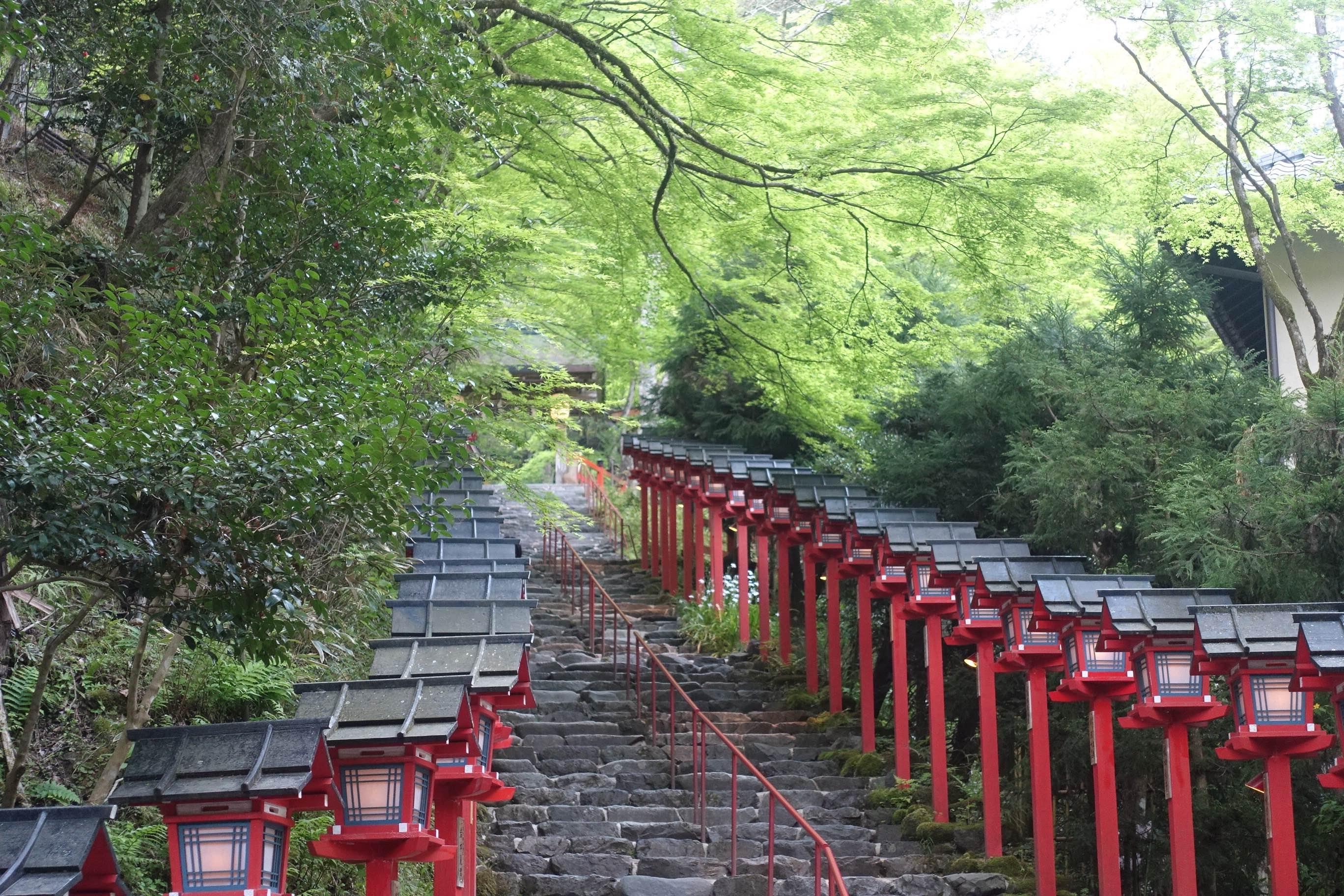 インスタ映えを演出する京都、SNSで自慢したくなるしくみづくり、「青もみじ」や初ライトアップを取材した【画像】