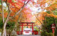 京都・大原野神社、台風被害の修復でクラウド資金調達、初の紅葉ライトアップイベント開催にあわせて