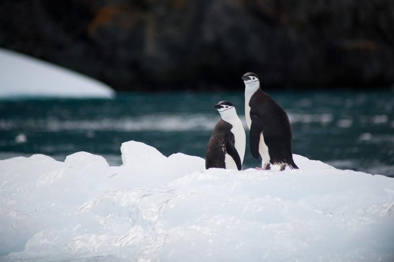 南極のオーバーツーリズム先例に学ぶ ―20年前に起きた論争に見るサステナブルな関係づくりの考え方とは?