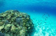 ANA万座ビーチリゾート、「サンゴ保護活動」で新たな海の体験プラン、環境保護の意義を学ぶ