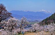 日本人の国内旅行消費額5.3%減、3月が不調、客室単価は微増で3.5万円 ―2019年第1四半期(速報)