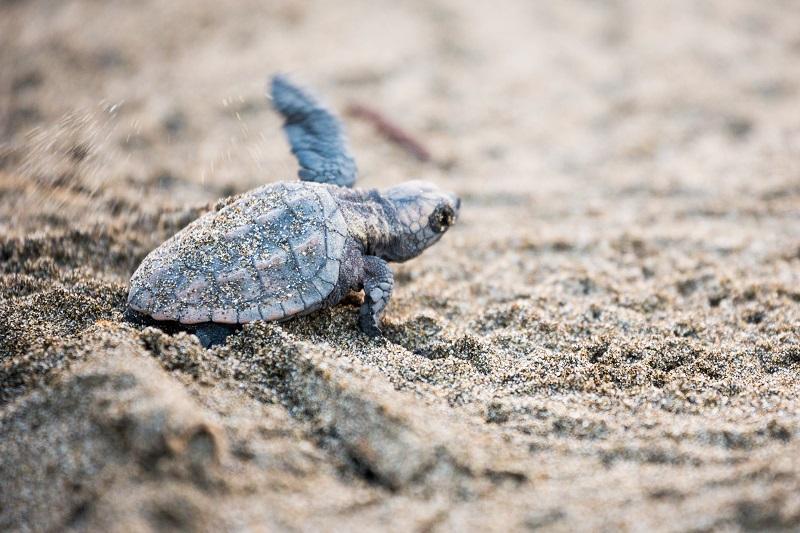 宮崎シーガイア、夏休み子ども向け旅育プログラムを強化、ウミガメの生態観察や植物アートづくり体験など宿泊プランに