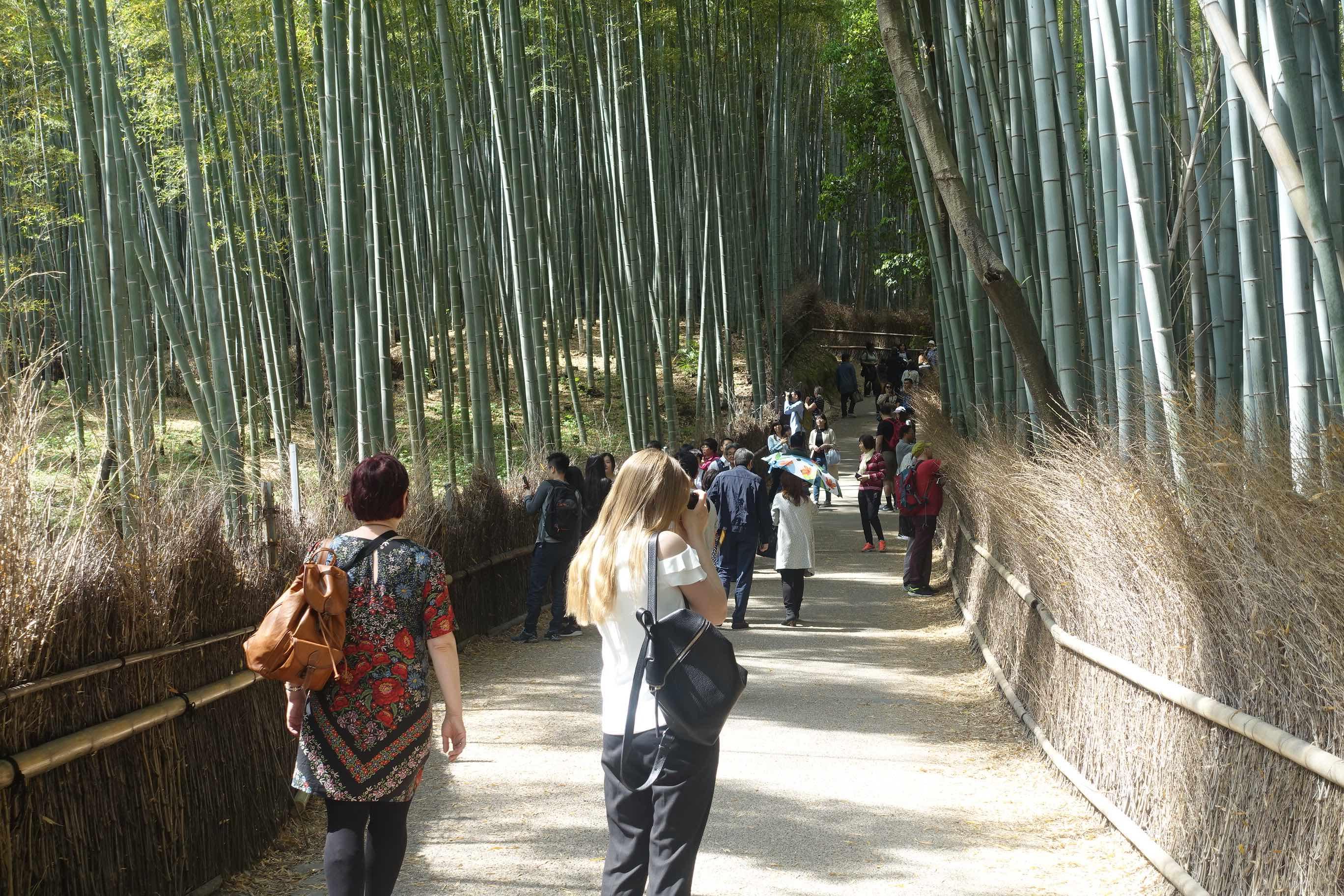 京都嵐山「オーバーツーリズム」対策の実証事業、混み具合の表示で分散化の結果に、訪問時間・場所の変更も顕著